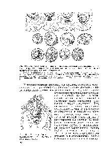 Триплоидная природа эндоспермы