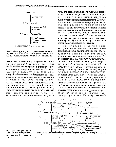 """Рис. 12.22. <a href=""""/info/357568"""">Синтез поли</a>(3-<a href=""""/info/200407"""">гидроксимасляной кислоты</a>) из ацетил-СоА. Справа от стрелок указаны ферменты, катализирующие соответствующие реакции."""