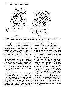 Карбогидраты