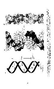 Схема двойная спираль